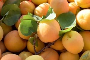 aprikosen einkochen rezept