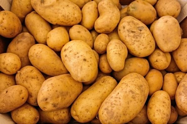 kartoffeln einkochen