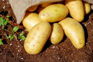 kartoffeln-einkochen-anleitung