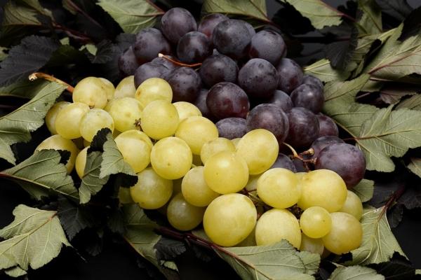 Weintrauben einkochen