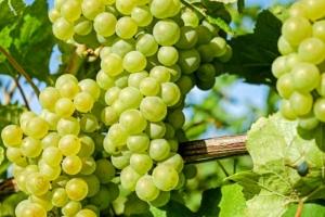 Weintrauben einkochen Anleitung