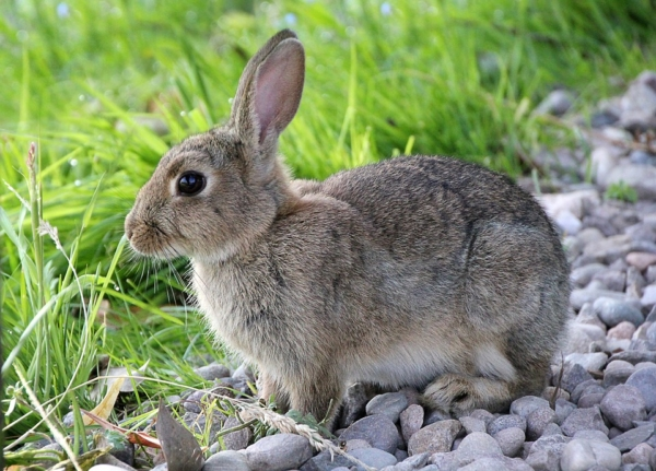 Kaninchenbraten einkochen