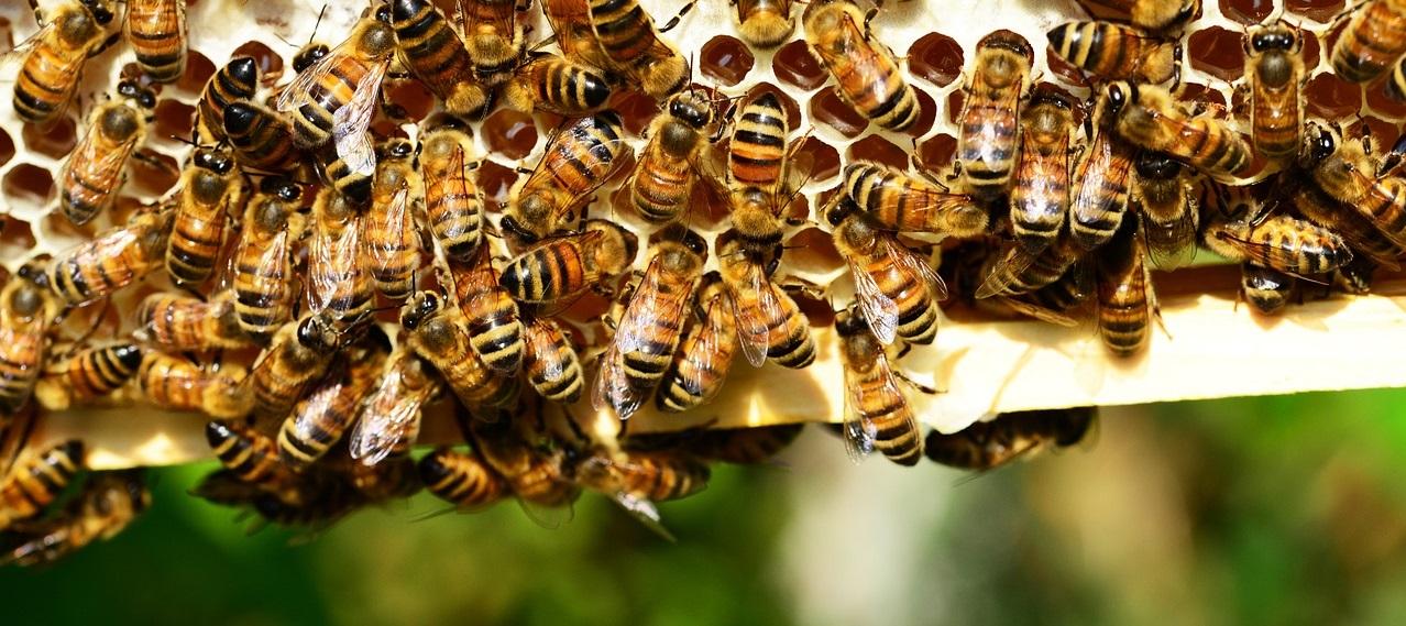 Honiggläser Logo