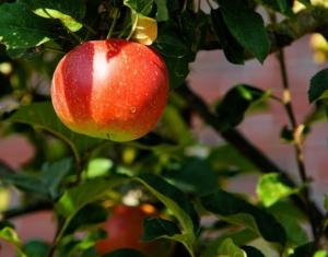Äpfel einkochen Anleitung