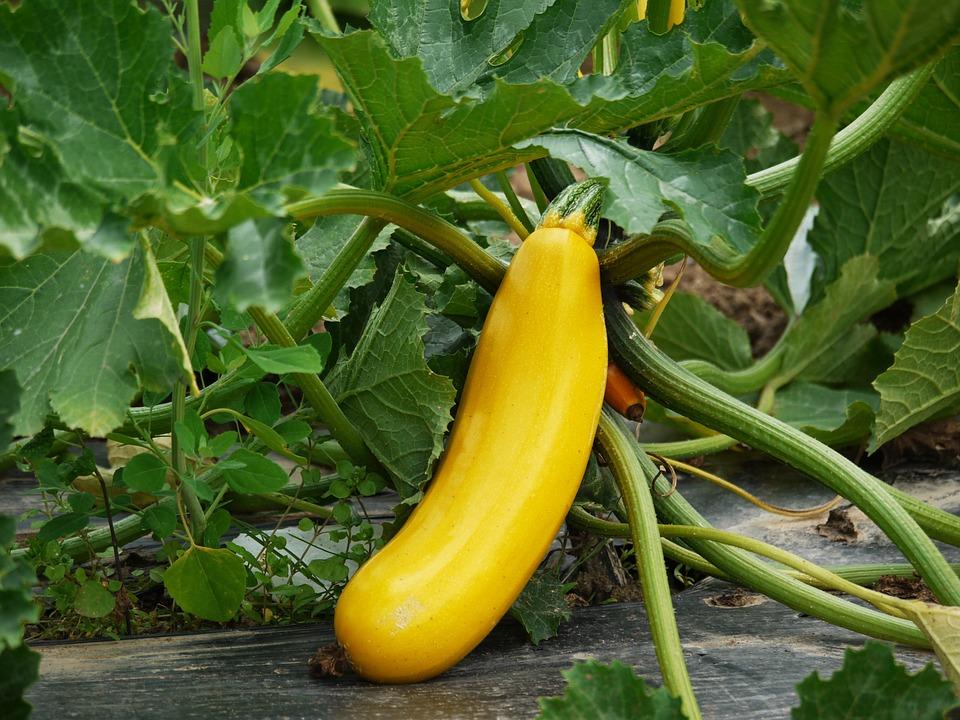 zucchini einkochen