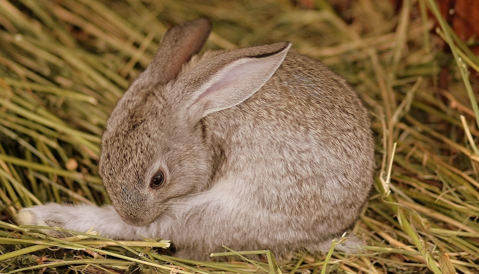 kaninchen einkochen