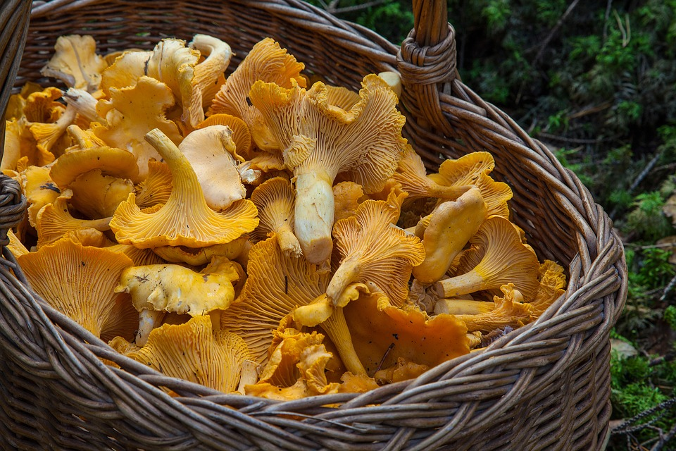Pilze einkochen